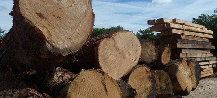 British Oak Logs