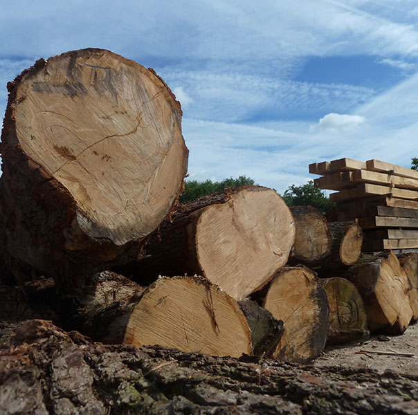 British Oak Logs