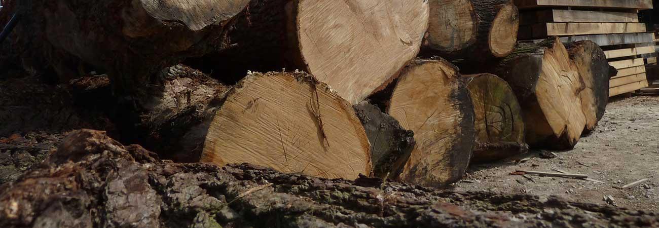 Large oak logs